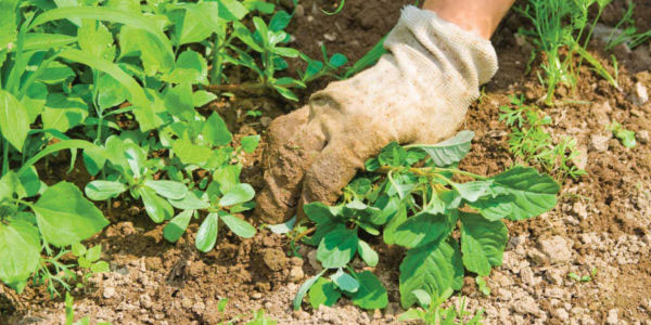 garden services in Northern Virginia and Middleburg