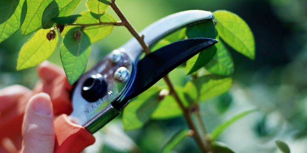 woman cutting pruning plants in Loudoun County