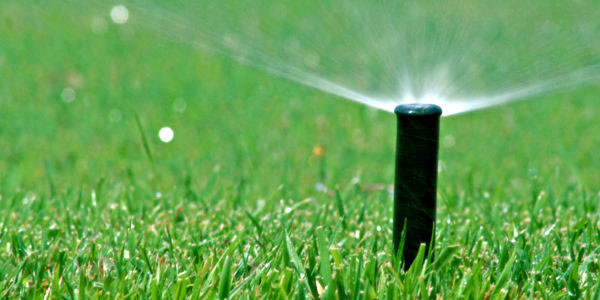 sprinkler running in the grass