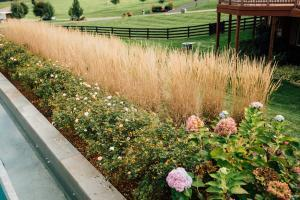 Weed control Great Falls and Northern Virginia landscaping