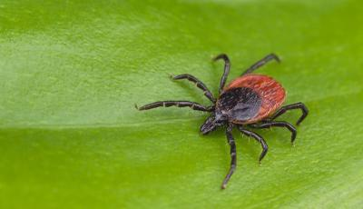 Tick and mosquito control loudoun county and fairfax Leesburg, Reston, Ashburn, Great Falls